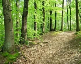 Как выбраться из леса фото