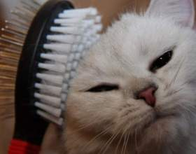 Как вычесать своего кота, если он сильно сопротивляется фото