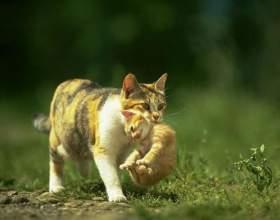 Как выглядит котенок в 2 месяца фото