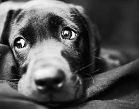 Как выглядят глисты у собак фото