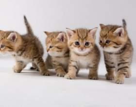 Как выглядят котята в месяц фото