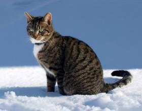 Как выглядят все породы кошек фото