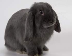 Как содержать декоративных кроликов фото
