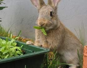 Как кормить и ухаживать за кроликами фото