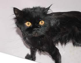 Как вымыть кота фото