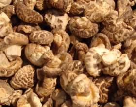 Как выращивать грибы шиитаке фото