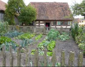 Как выращивать на огороде фото