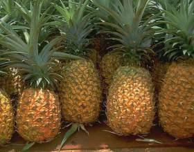 Как вырастить ананас из купленного в магазине плода фото