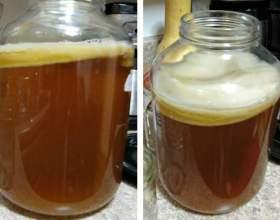 Как вырастить чайный гриб в домашних условиях фото