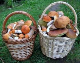 Как вырастить грибы на даче фото