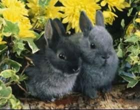 Как вырастить кролика дома фото