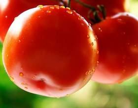 Как вырастить томаты фото