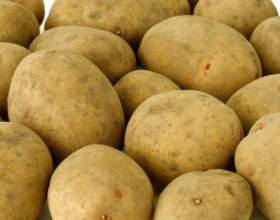 Как вырастить урожай картофеля фото