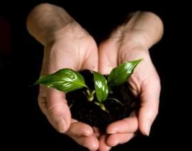 Как вырастить здоровую рассаду фото