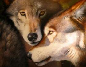 Как вышить волка фото