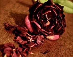 Как высушить розу фото