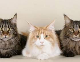 Как избавить кота от блох фото