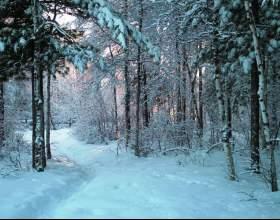 Как выжить в лесу зимой фото
