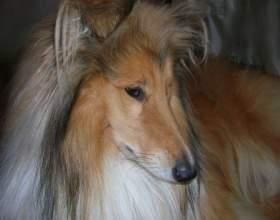 Как взять собаку из приюта - особенности выбора фото