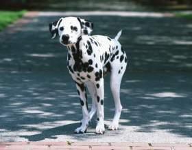 Как взять собаку в дар фото