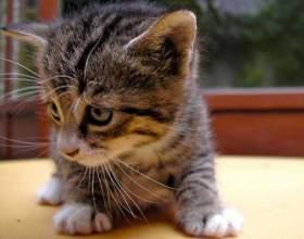 Как заботиться о котенке фото