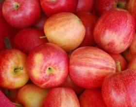 Как заморозить яблоки на зиму дольками фото