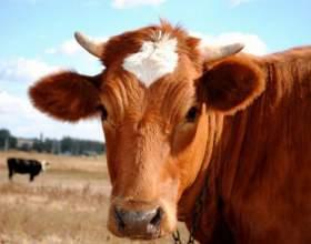 Как заняться фермерством фото
