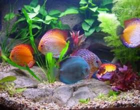Как запустить рыб в новый аквариум фото