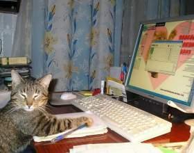 Как заработать в интернете лентяю фото