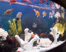 Как заселять аквариум фото