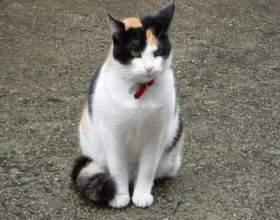 Как надевать кошке ошейник фото