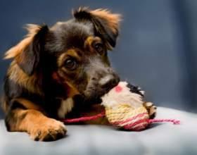 Как защитить собаку от паразитов фото