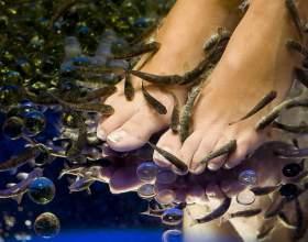 Как завести аквариумных рыбок фото