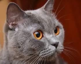 Как завести кошку фото