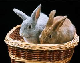 Как завести кроликов фото