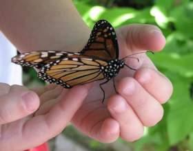 Как знакомить дошкольников с природой фото