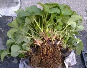 Какая корневая система бывает у растений фото