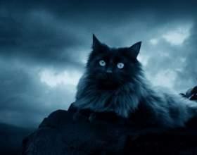 Какая кошка подходит знаку зодиака фото