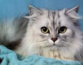 Какая порода кошек самая дорогая фото