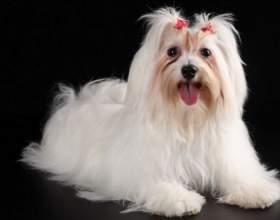 Какая порода собак подходит для новичков фото