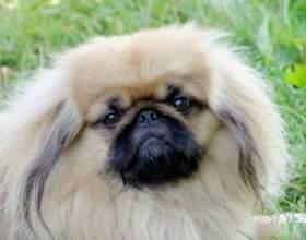 Какая собака лучше всего для дома фото