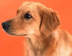 Какая собака лучше всего для ребенка фото