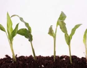 Какие бывают корневые системы растений фото