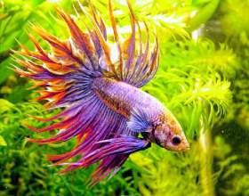 Какие бывают виды аквариумных фильтров фото