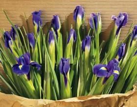 Какие цветы можно дарить мужчинам фото