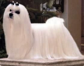 Какие есть породы комнатных собак фото