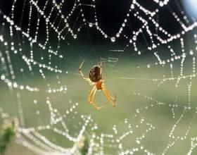Какие есть приметы про пауков фото