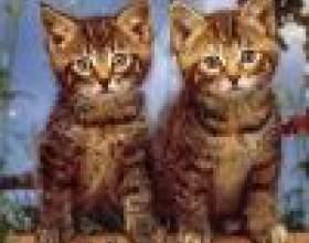 Какие игрушки выбрать для кошки фото