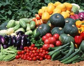 Какие консервы можно приготовить из овощей фото