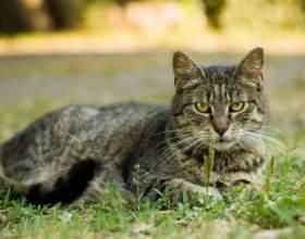 Какие нужны прививки кошке фото